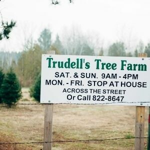Trudell's Tree Farm